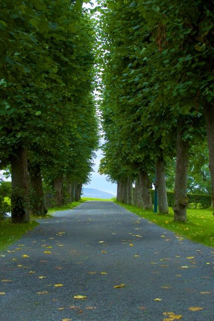 Avenue by Bergenhus festning